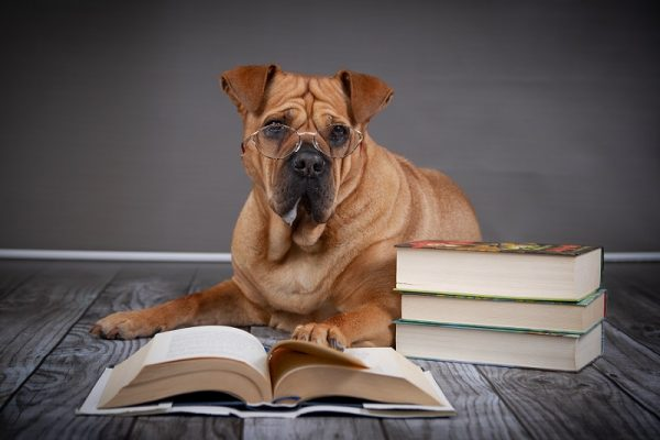 Mastiffs in Mysteries