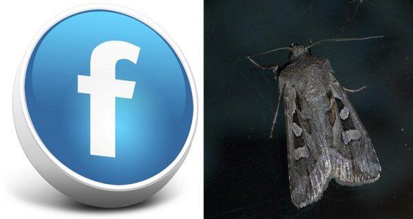 Life Goes On Despite Miller Moths and Facebook Fits